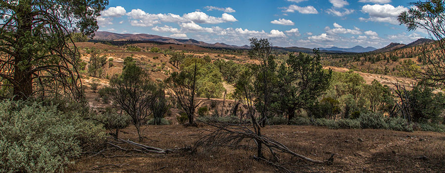 23-12-2014 119 Flinders Ranges